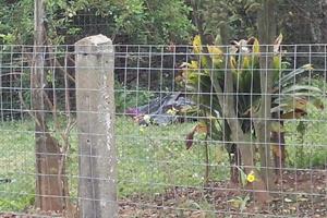 morto-riobarigui28092013