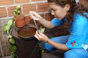 Paraná reforça monitoramento da dengue antes do verão.Foto: Divulgação
