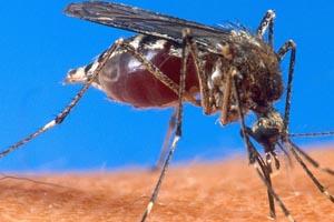 malaria-230514-bandab