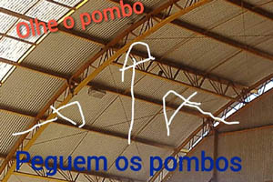 pombos-6