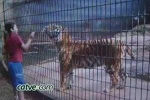 tigre menino