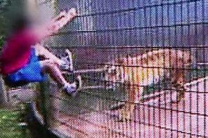menino tigre