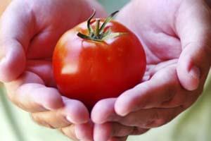 tomate-280814-bandab