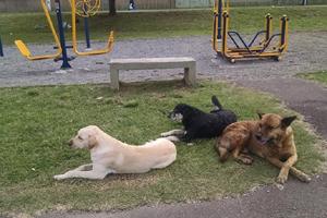 cachorrosnoparquinho5