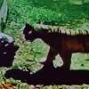 tigre.headlines-des