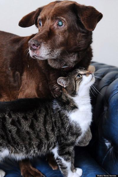gato-cao-guia