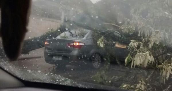 Queda de árvore complicou trânsito no Boa Vista (Foto: Elizandra Beffa)