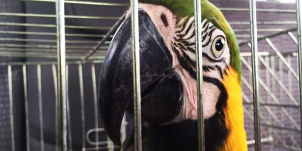 Animais silvestres apreendidos e resgatados podem ser adotados. Curitiba, 09/08/2016. Foto: Divulgação IAP
