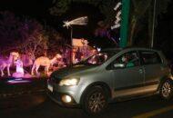 Caminho de Luz Condor no Barigui passa a ter agendamento obrigatório pela internet